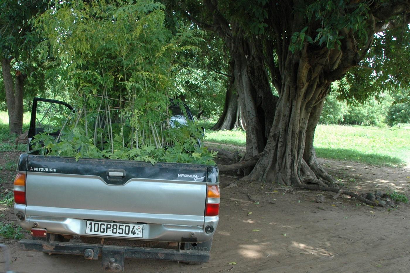 environnement-reforestation